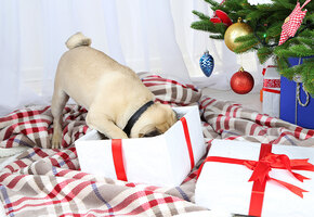 Хозяйка потратила 7000 фунтов на подарки щенку. Посмотрите, что она купила!