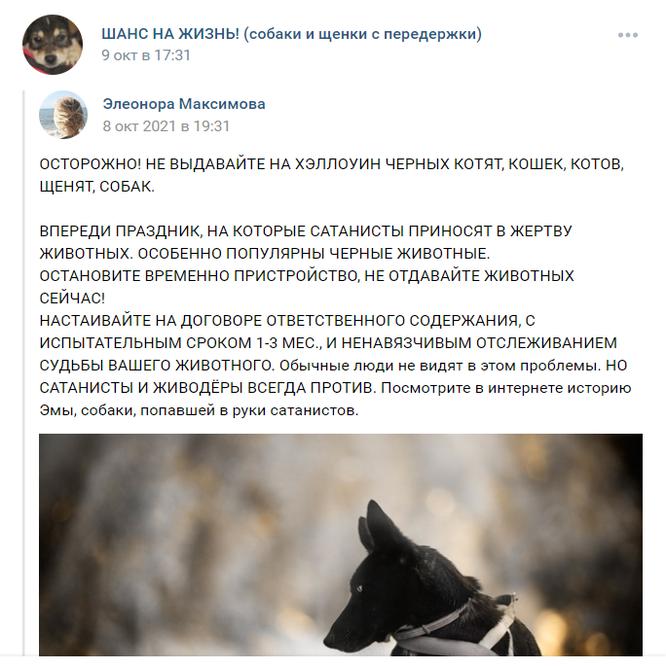 черных кошек убивают сатанисты