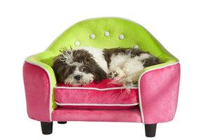 9 способов сохранить дом чистым, если у вас есть собака. Или кошка