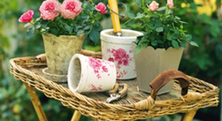 Выбираем розы длясада!