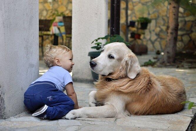 Собаки воспитали девочку, а теперь учат ее делать первые шаги