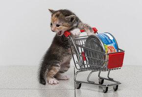 Вы не поверите: ученые выяснили, как правильно кормить котов