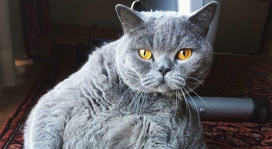 Владелец попросил усыпить кота, похожего нашар. Но врач нашла другое решение