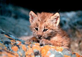 Ошибочка вышла: женщина подобрала котенка, который оказался опасным хищником