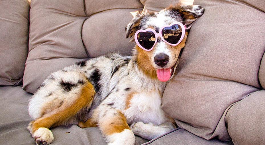 Все, что вы хотели знать освоих собаках: отвечают специалисты