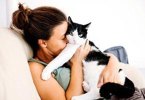 Знает ли ваша кошка, как ее зовут? Объясняют ученые