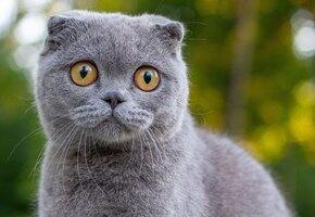 Ученые выяснили, что у экзотических кошек проблемы с общением