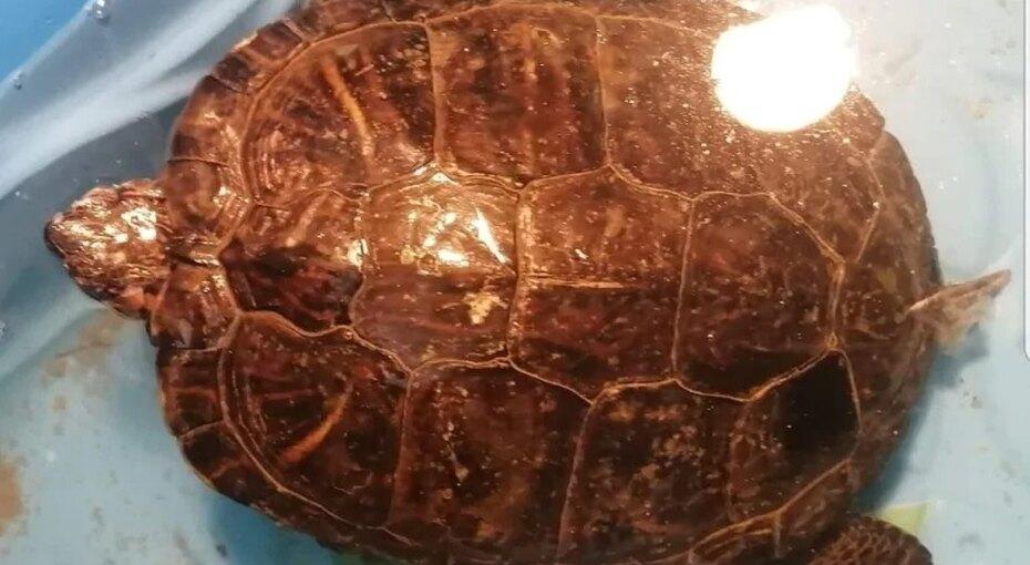 «Впечатляюще, но реально»: теплолюбивая черепаха потерялась, пережила снежную зиму ивернулась домой через10 месяцев