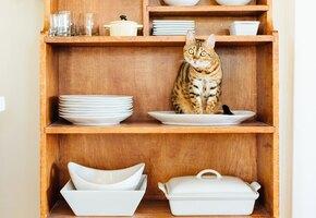 Кошатники против собачников! Как толковать кошачий язык тела