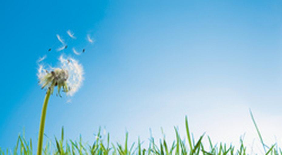 Аллергия: новый метод лечения