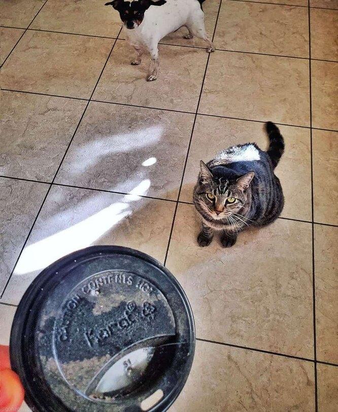 кот приносит подарки