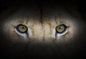 Льва держали в рабстве.  Спасти его помогли ролики в Тик-Токе