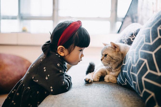 Почему кошки пристально смотрят на человека