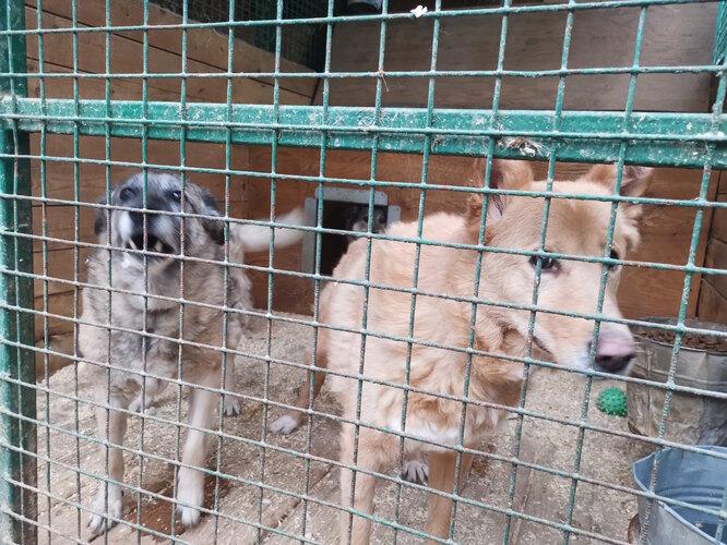 Бирюлевский приют. Фото предоставлены волонтерами приюта и опекунами собак