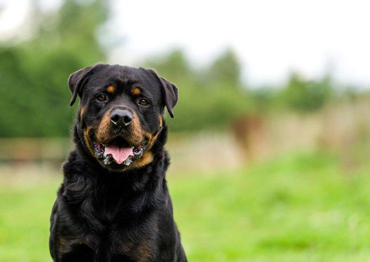 Собака без намордника статья