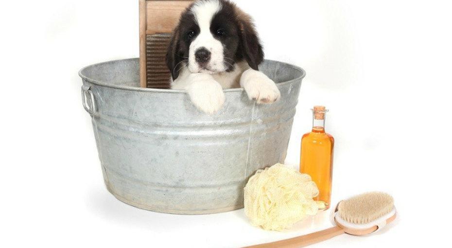 Как сделать домашний шампунь длясобак?