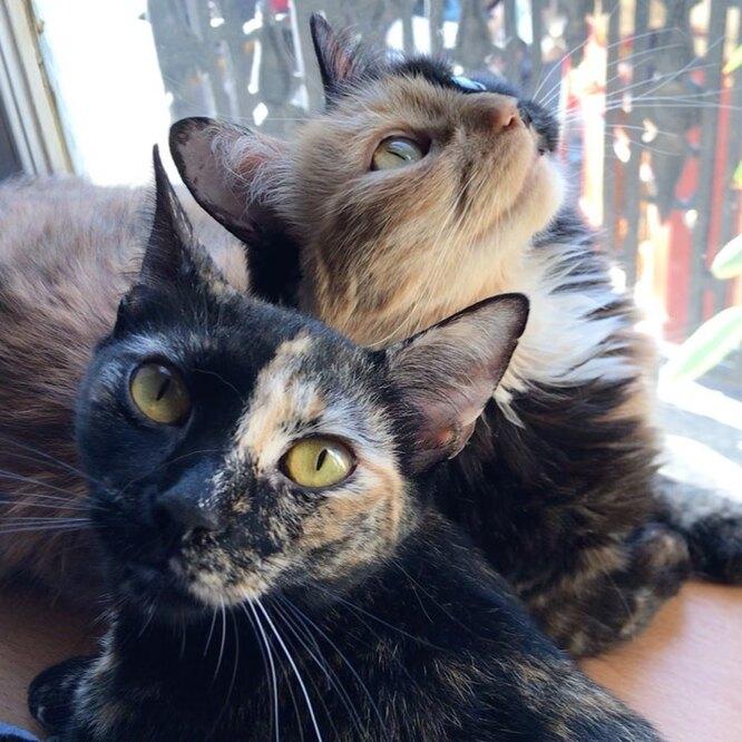 Кошка Химера с о своим котенком фото
