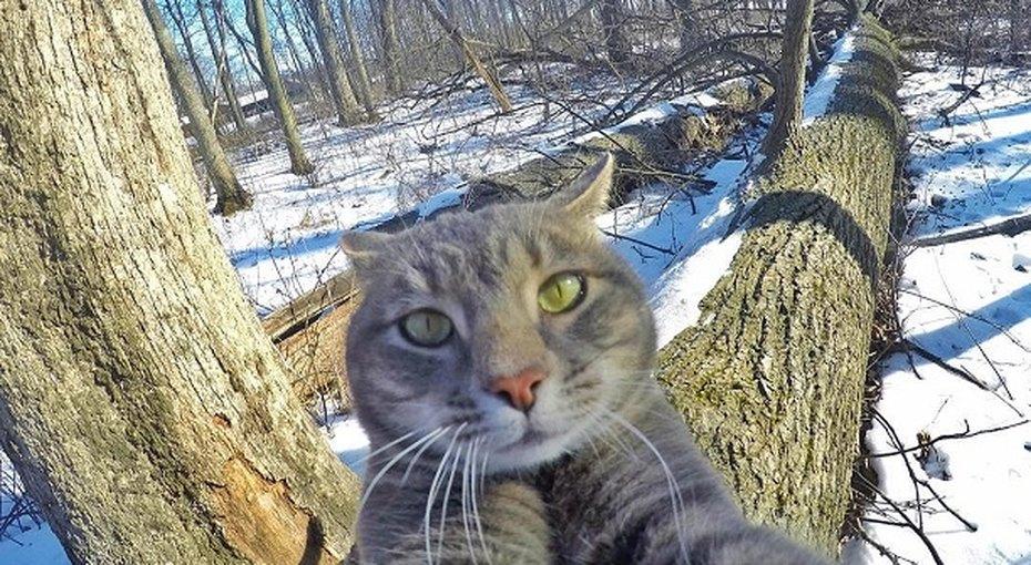 Кот, умеющий делать селфи, покорил Интернет