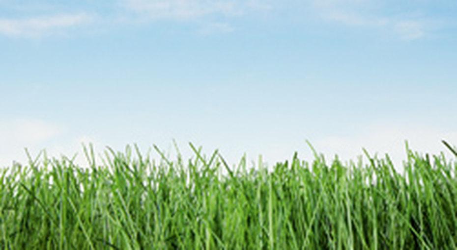 Вырастить газон