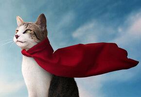 10 героических кошек, спасавших жизнь
