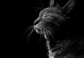 Женщина нашла кота, пропавшего 5 лет назад. Оказалось, он все время был рядом