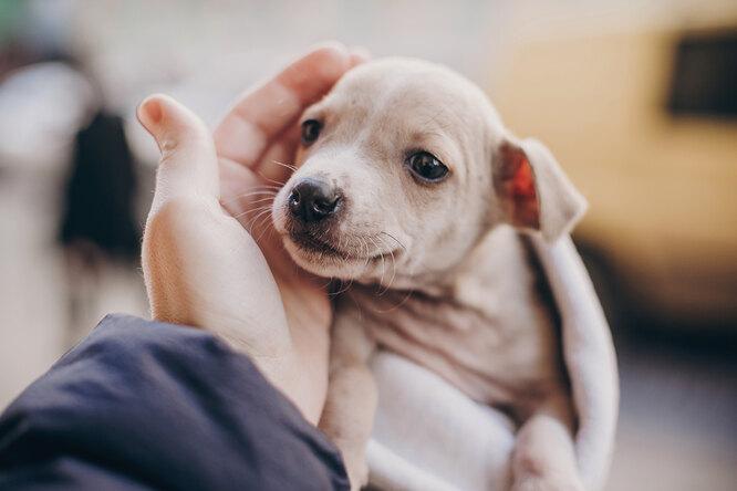 Сердце разрывается: щенок прижался кфигуре собаки, решив, что это его мать