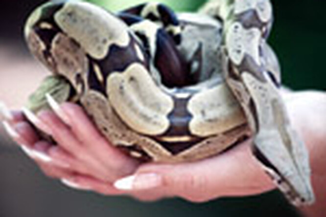 Для маникюра вам понадобится... змея