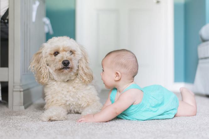Ковер ребенок собака