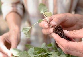 Что сажать в апреле: посевной календарь садовода