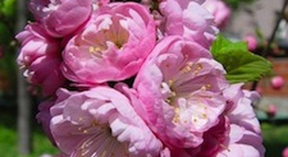 Весенний фестиваль цветов вБотаническом саду МГУ