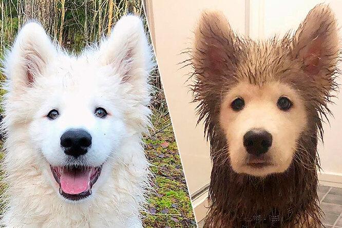 Всегда найдут лужу: смешные фото собак дои после прогулки