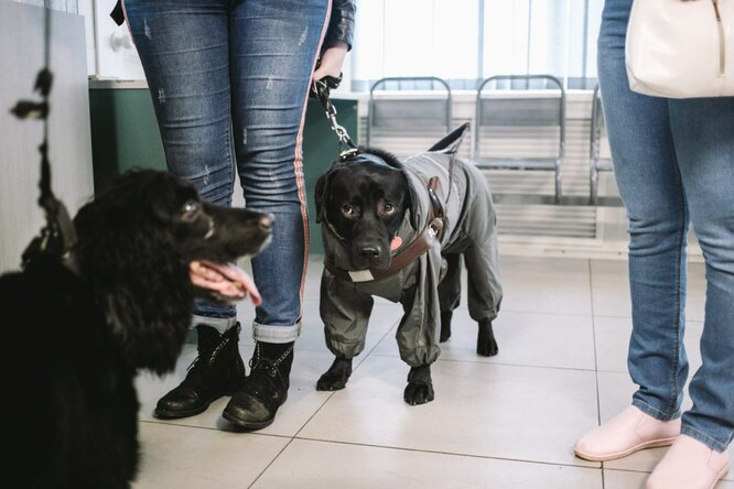 Антонина и Юстас в ветеринарной клинике. Юстас боится врачей и не любит атмосферу клиники Фото: Наталья Булкина для ТД