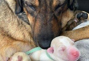 Эта семья просидела машине 12 часов, чтобы бездомная собака родила в тепле