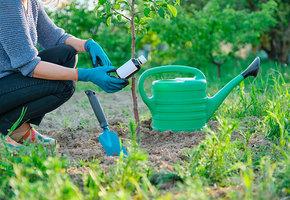 Смородина, малина и крыжовник: чем обработать сад весной и защитить кустарники от вредителей