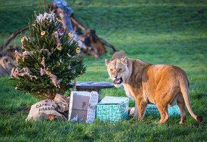 Время счастья: в зоопарке животные радуются непроданным елкам