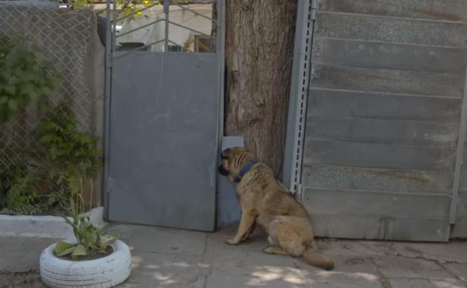 самая добрая собака