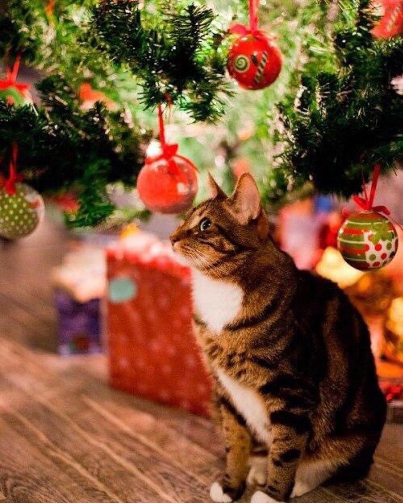 кошка новый год