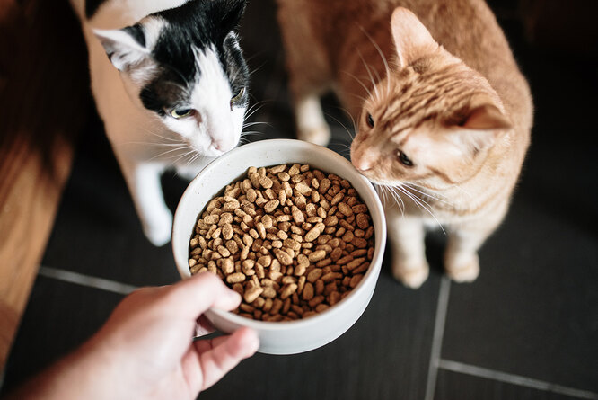 По каким причинам кот отказывается от еды