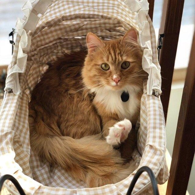 Кот Минька