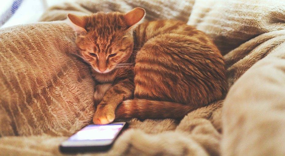 Лучшие приложения для животных, о которых вы не знали