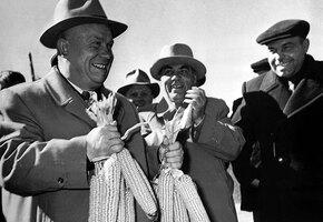 Почему Хрущев обожал кукурузу, и как она чуть не разорила СССР
