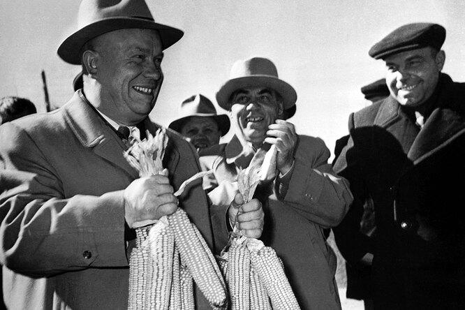 Почему Хрущев обожал кукурузу, икак она чуть неразорила СССР