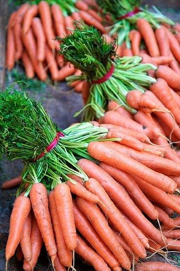 """Морковь сорта """"Цилиндра"""""""