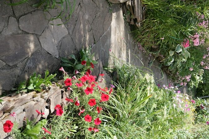 Клумбы надаче своими руками: смноголетними иоднолетними растениями