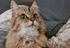 Кошка-тихоня вела двойную жизнь. Но однажды она вернулась домой с запиской