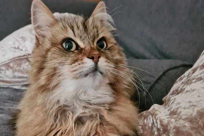 Кошка-тихоня вела двойную жизнь. Но однажды она вернулась домой сзапиской