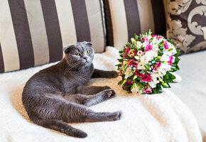 Котенок чуть не сорвал свадьбу хозяев, съев из букета невесты опасные цветы