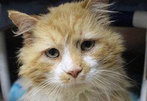 Кот прошел 20 км в поисках бросивших его хозяев - но они попросили его усыпить