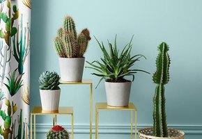 7 любопытных фактов про кактусы, о которых вы можете не знать