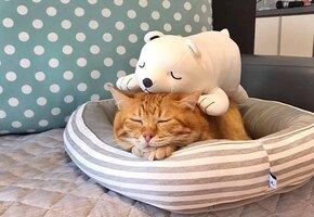 Котик на подушке: в Китае найден самый сонный кот в мире